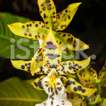 stock-photo-60153892-beautiful-orchid